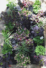 English Garden plants staged for planting in 24 pocket planter