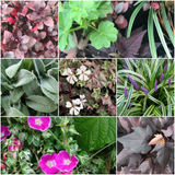 English Garden Plants - Living Wall Collection