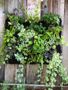 English Garden Living Wall - 12 Pocket Planter