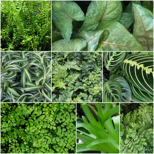 Rainforest plant image collage