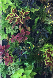 Fireside Living Wall 24 pocket planter