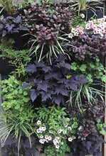 English Garden Leafy Living Wall - 24 pocket planter