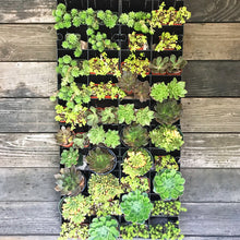 4 Planter Panel mounted on wooden wall