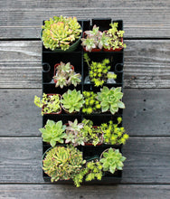 Succulent Planter Kit hanging on wall - Golden Rays Creative Design