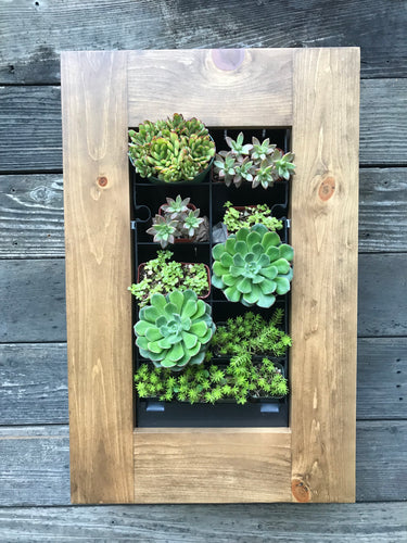 Framed Succulent Planter Kit Mounted on Wall - Golden Rays Diagonal Design