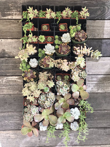 "Vertical Garden kit with brown and silver succulents and wall planter that is 17"" x 36"""