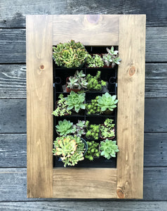 Framed Succulent Planter Kit Mounted on Wall - Golden Rays Creative Design