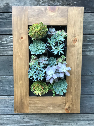 Confetti Framed Succulent Planter Kit hanging on wall 24