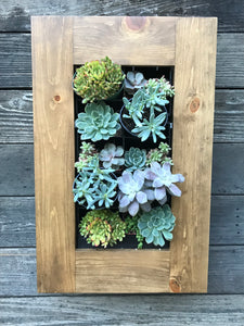 "Confetti Framed Succulent Planter Kit hanging on wall 24""x15.5"""
