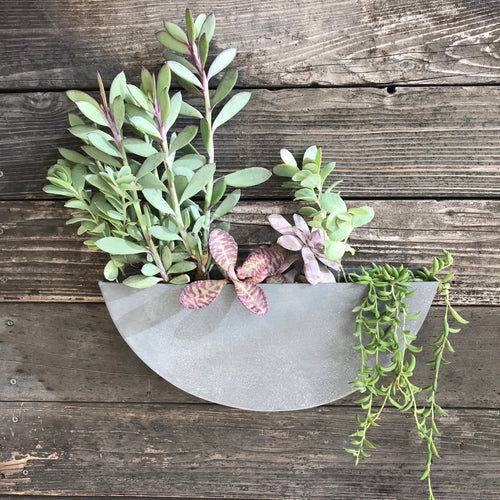 Zinc Half- Circle Wall Garden Bundle  - Plants + Lg Planter