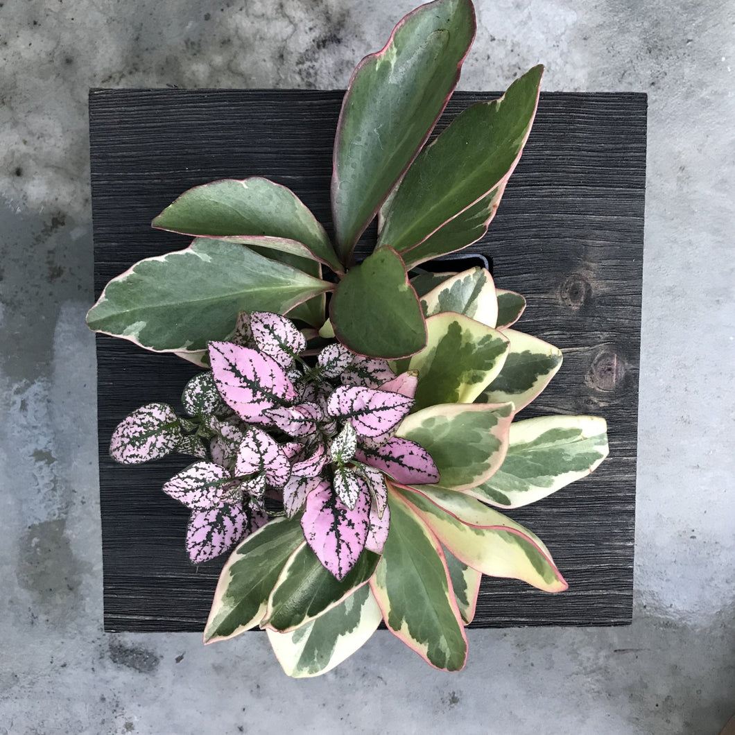 Mini Frame Planted with Leafy Plants