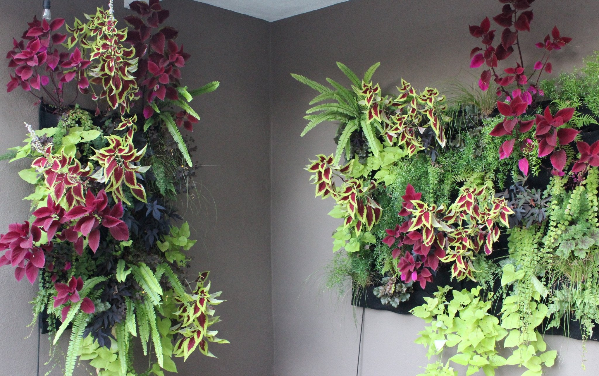 Fireside Leafy Living Wall 24 Pocket Planter Planted Places