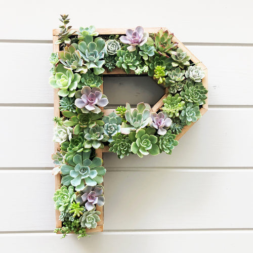 Large Succulent Letter with Wood Frame planted with 40 succulents