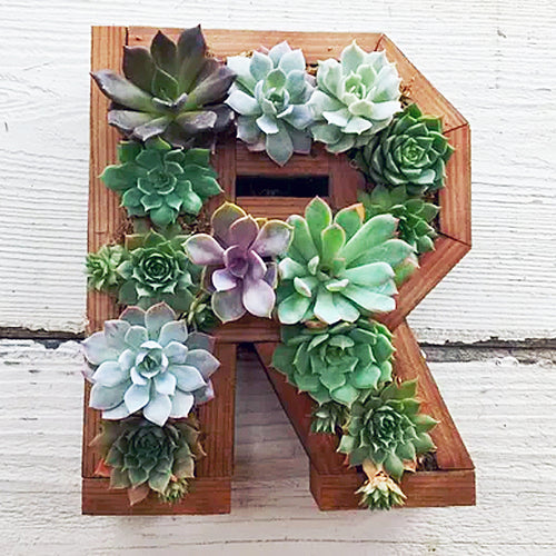Medium Succulent Wood Frame Letter