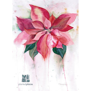Watercolor Poinsettia Notecards
