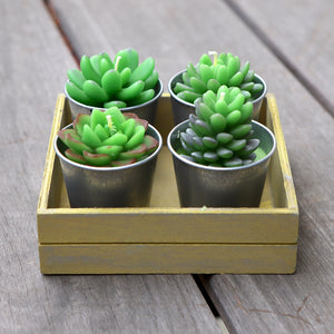 Potted Succulent Candle Box on Deck