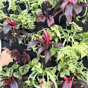 Rainforest Leafy Living Wall plants
