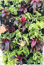 Rainforest Leafy Living Wall - 24 pocket planter