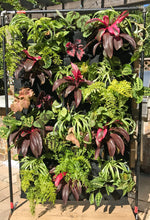 Rainforest living wall on stand