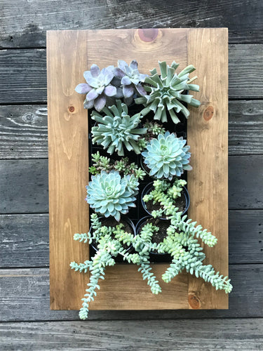 Framed Succulent Planter Kit Mounted on Wall - Splash of Pink Diagonal Design