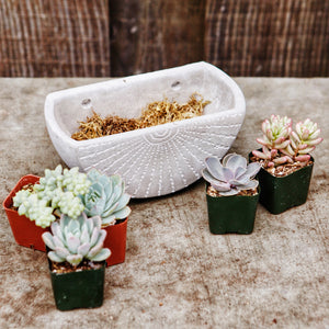 Small cement planter kit