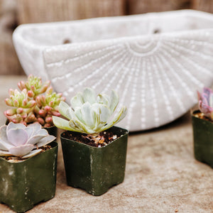 Rae Cement Wall Planter Bundle