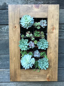 Framed Succulent Planter Kit Mounted on Wall - Splash of Pink Creative Design