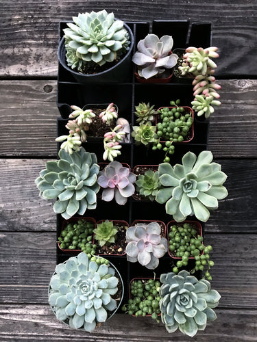 Succulent Planter Kit hanging on wall - Splash of Pink Creative Design