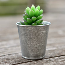 Potted Succulent Candle Variety 4