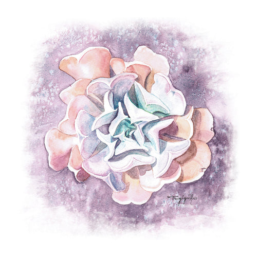 Echeveria Swan Lake Watercolor