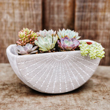 Succulents in large cement wall planter