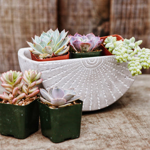 Succulents in small cement wall planter