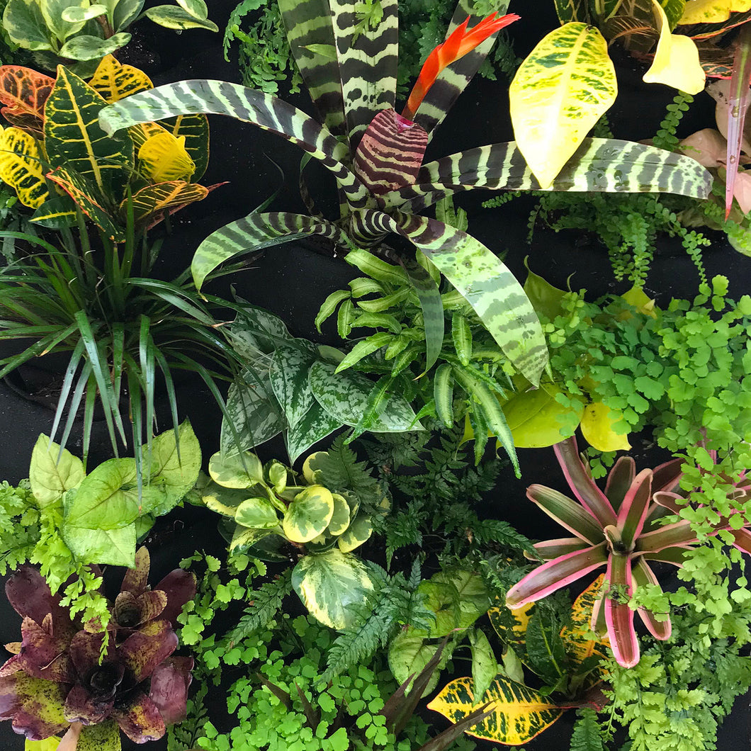 Tropical Leafy Wall Plants and Bromeliads