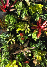 Tropical Leafy Wall with Bromeliads