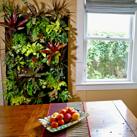 24 pocket Tropical Living Wall in Dining Room