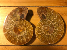 Ammonite Pair, Morocco, Large Size