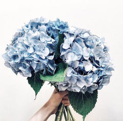 hydrangea the floral delivery wellington
