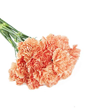 orange carnations florist wellington