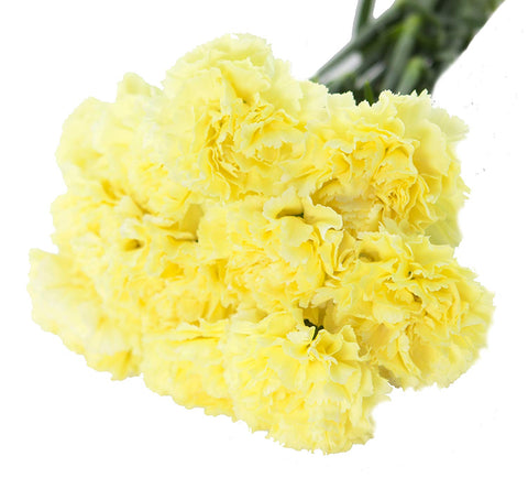 yellow carnations florist wellington