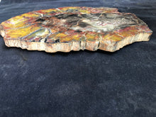 Petrified Wood Slab- Arizona
