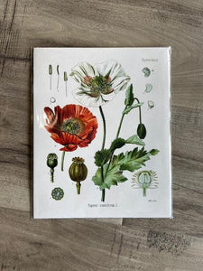 Print Vintage Botanical Collection