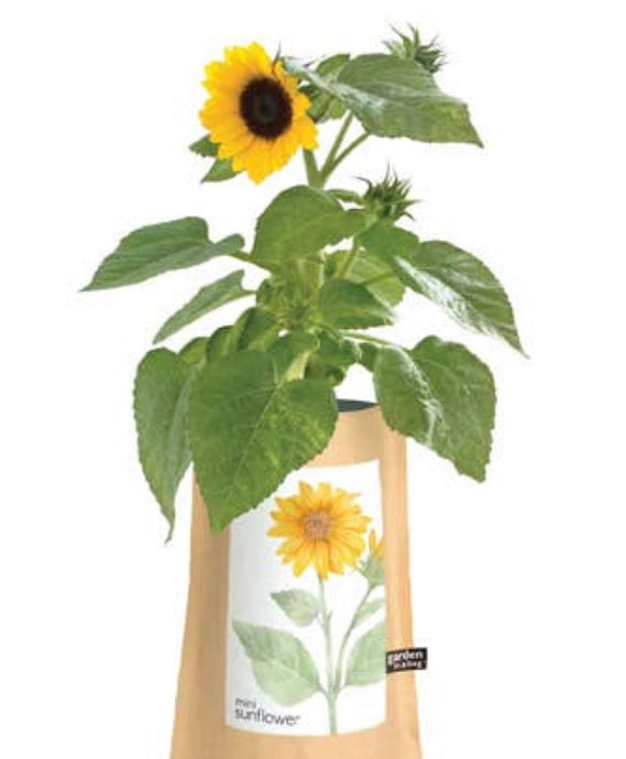 Garden in a Bag Sunflower