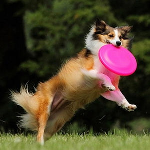 Pet Dogs Flying Disc Training Fetch Toys - Puppy's Planet