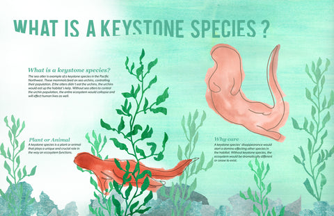 An infographic depicting an otter and describing the aspects of a keystone species.