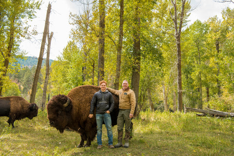 Zach stands next to a large member of the heard on the Bitterroot Bison property.