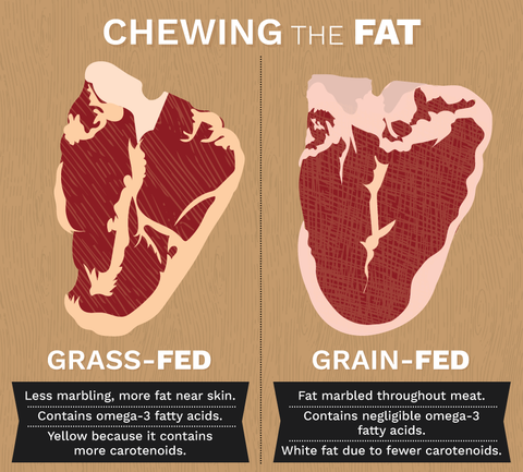 An infographic explaining the differences between grass and grain feeding in meat quality.