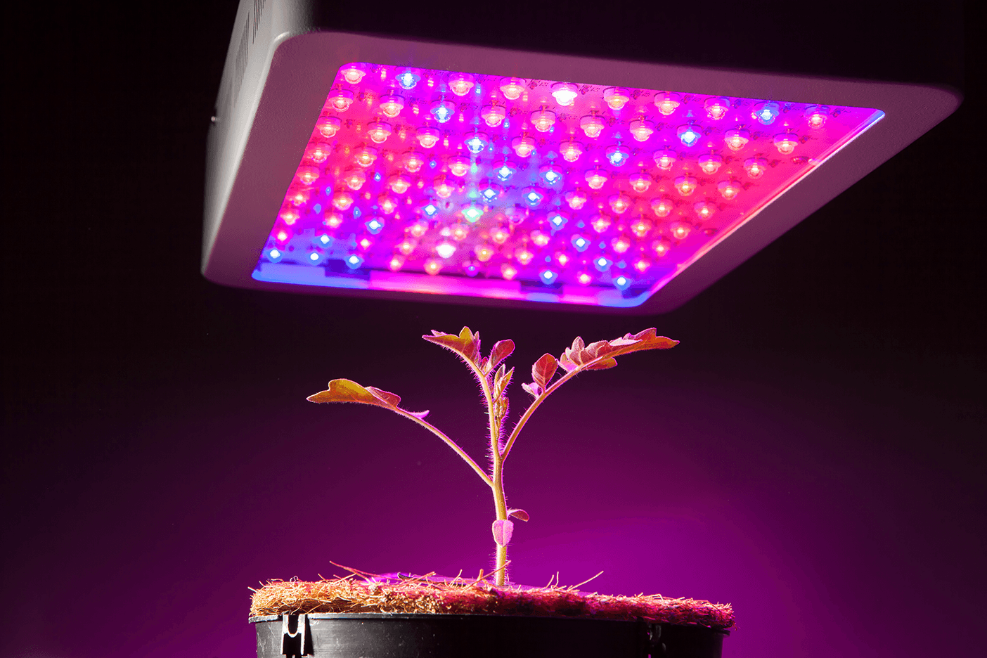 Getting to know grow lights