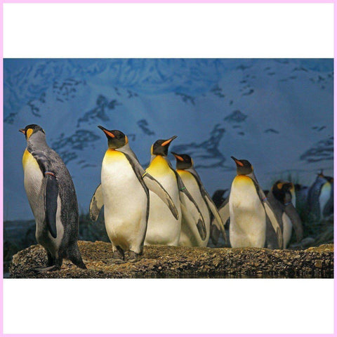 Image of A Penguin's Journey-Diamond Painting Kit-25x40cm (10x16 in)-Square-Heartful Diamonds