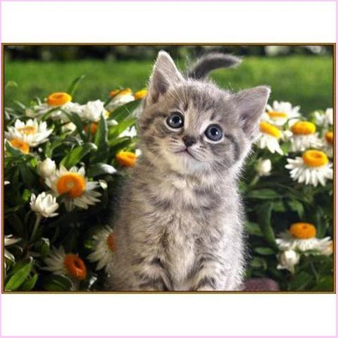 Image of Cute Kitty - Starter Edition-Starter Kit-Cute Kitty-20x30cm (8x12 in)-Heartful Diamonds