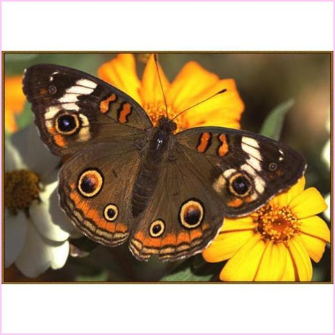 Image of Monarch Butterfly - Starter Edition-Starter Kit-Monarch Butterfly-20x30cm (8x12 in)-Heartful Diamonds